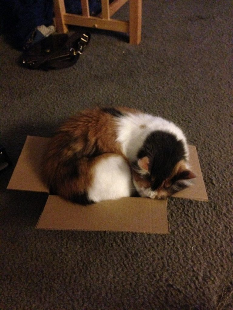 cat-refuses-boxes-too-small-10