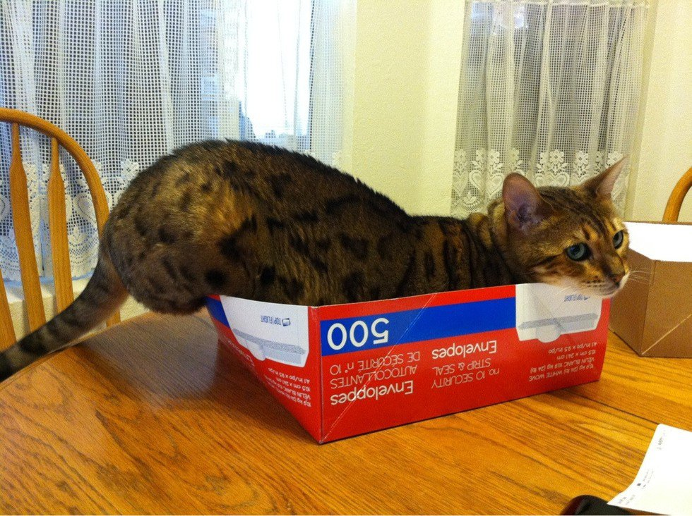 cat-refuses-boxes-too-small-13