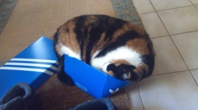 cat-refuses-boxes-too-small-14