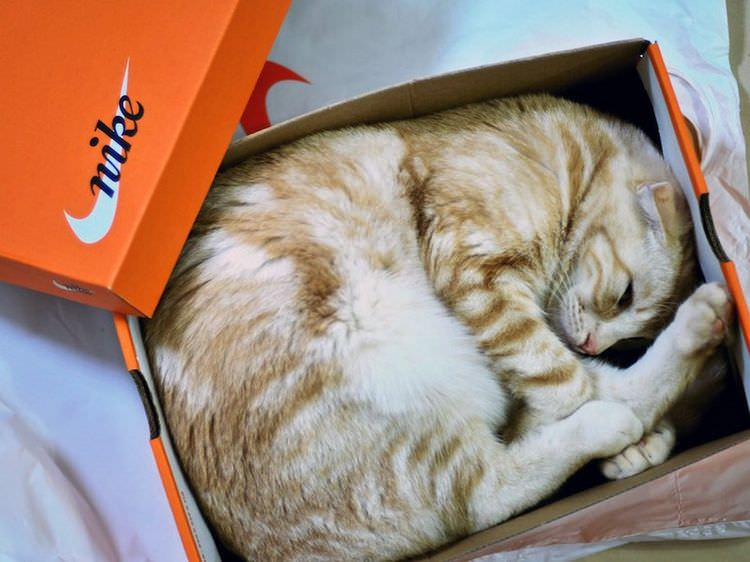 cat-refuses-boxes-too-small-18