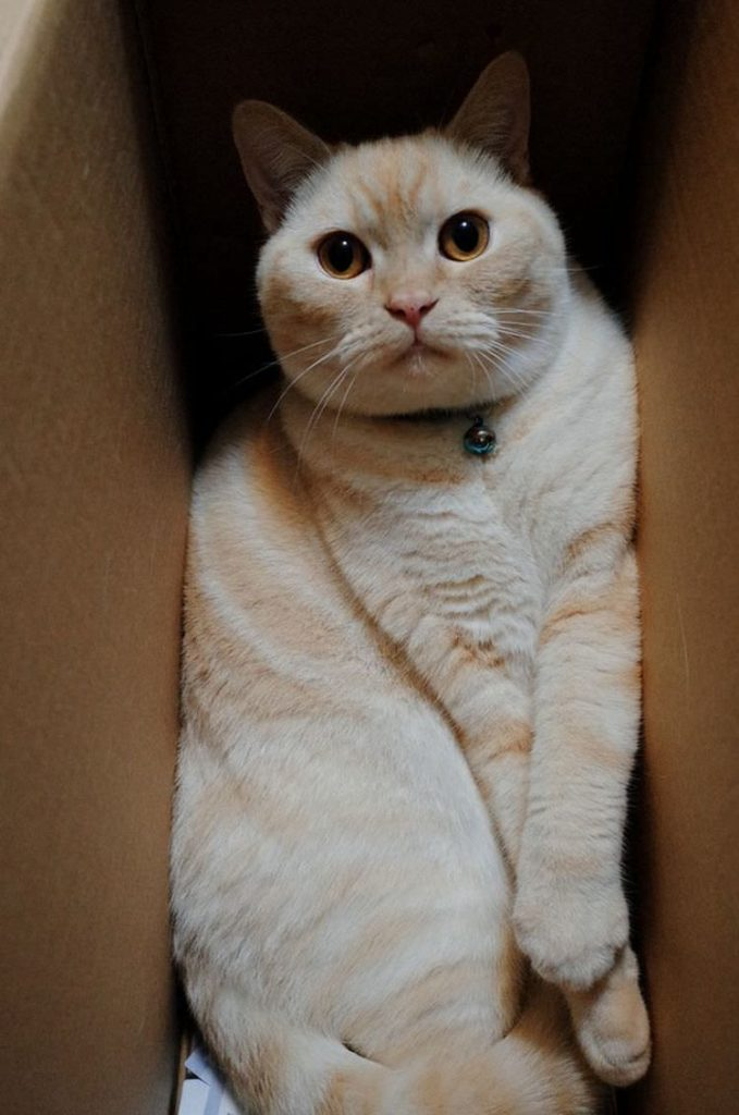 cat-refuses-boxes-too-small-19