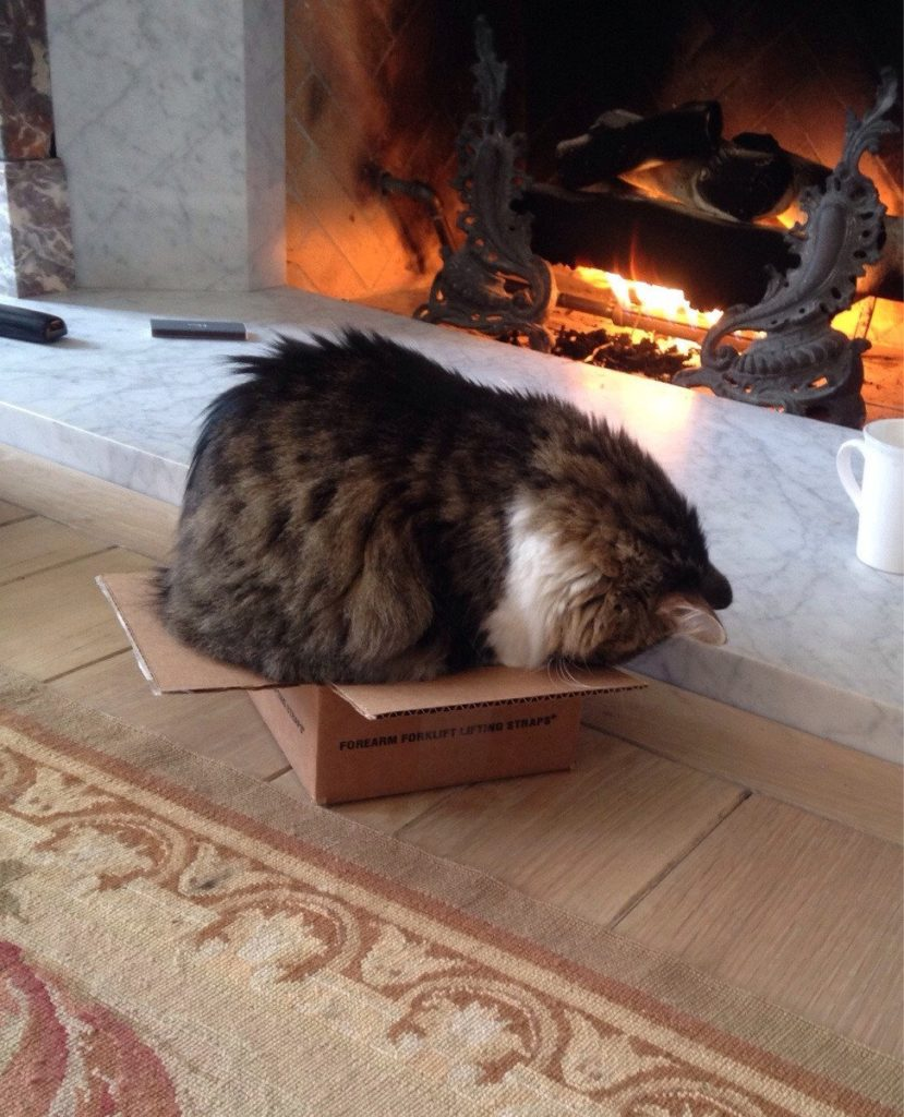 cat-refuses-boxes-too-small-2