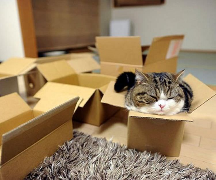 cat-refuses-boxes-too-small-20