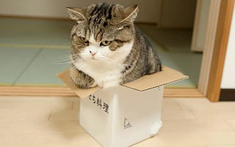 cat-refuses-boxes-too-small-21