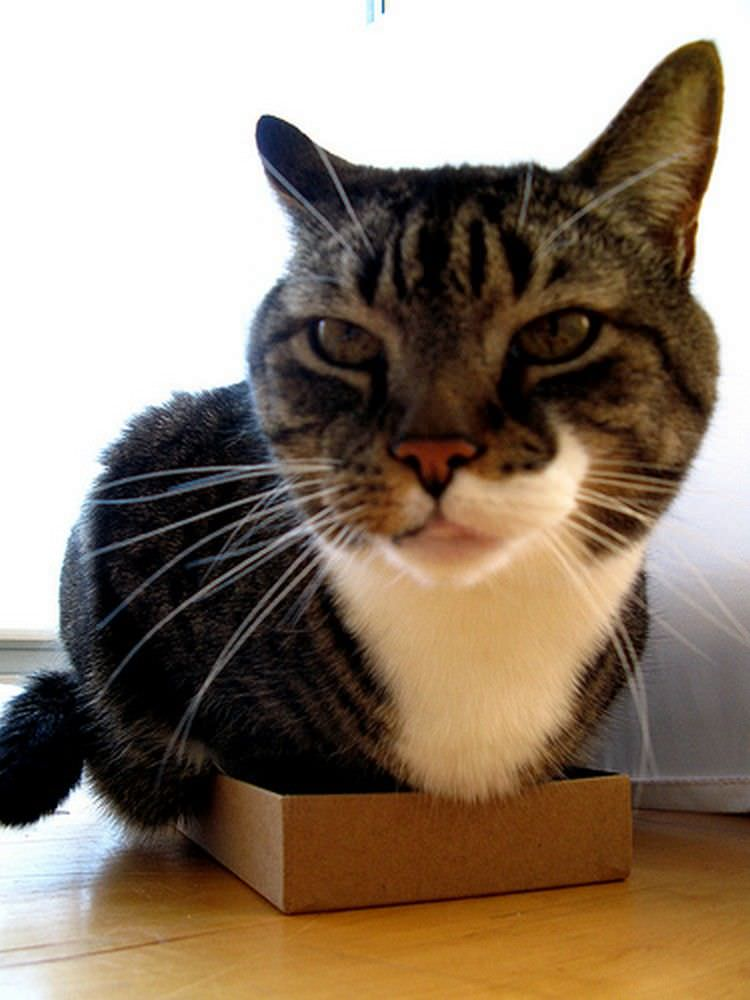 cat-refuses-boxes-too-small-23