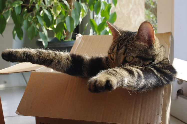 cat-refuses-boxes-too-small-24