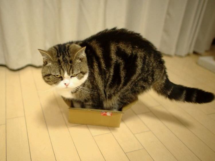 cat-refuses-boxes-too-small-25