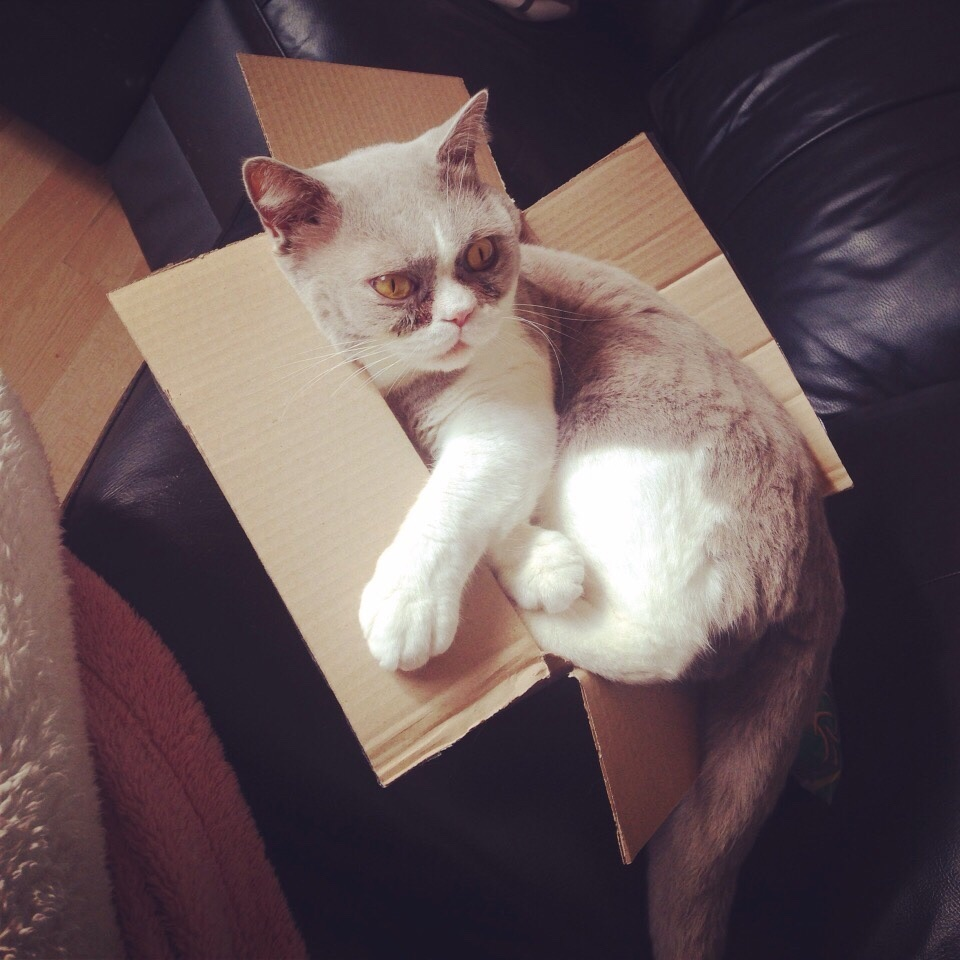 cat-refuses-boxes-too-small-6