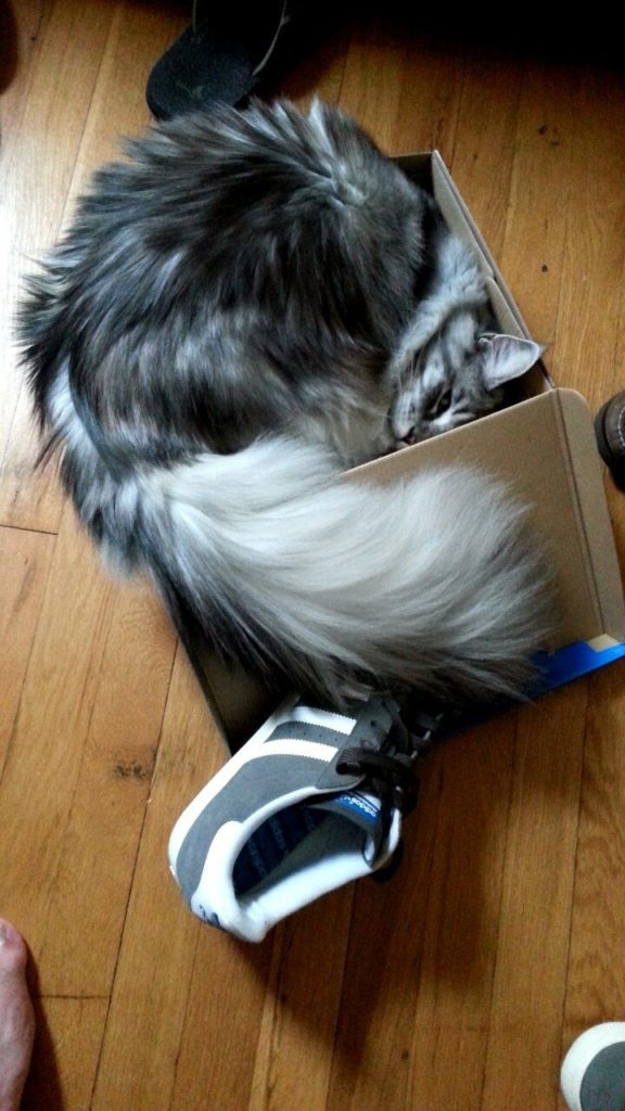 cat-refuses-boxes-too-small-7