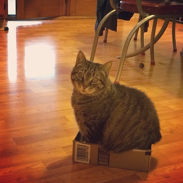 cat-refuses-boxes-too-small-9