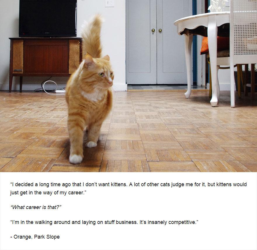 cat-secrets-02