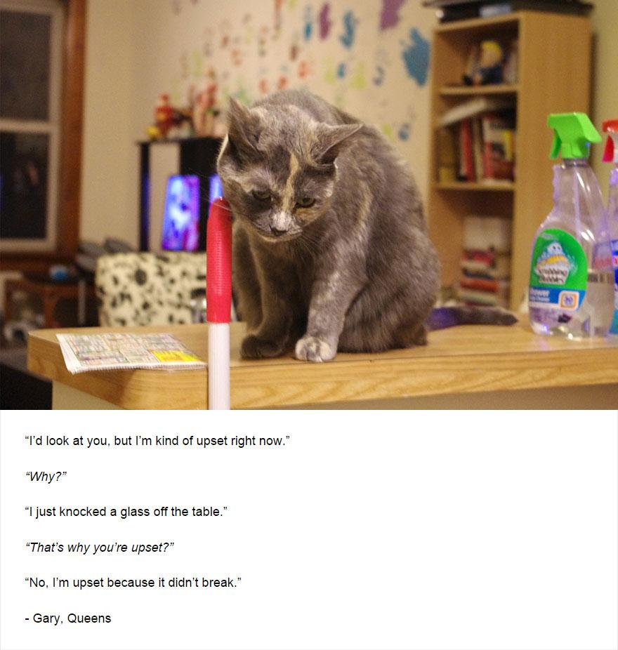 cat-secrets-03