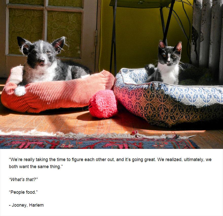 cat-secrets-05