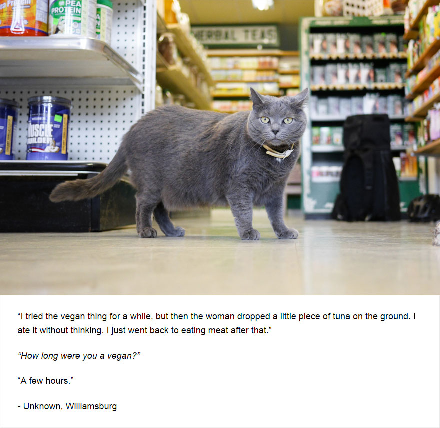 cat-secrets-06
