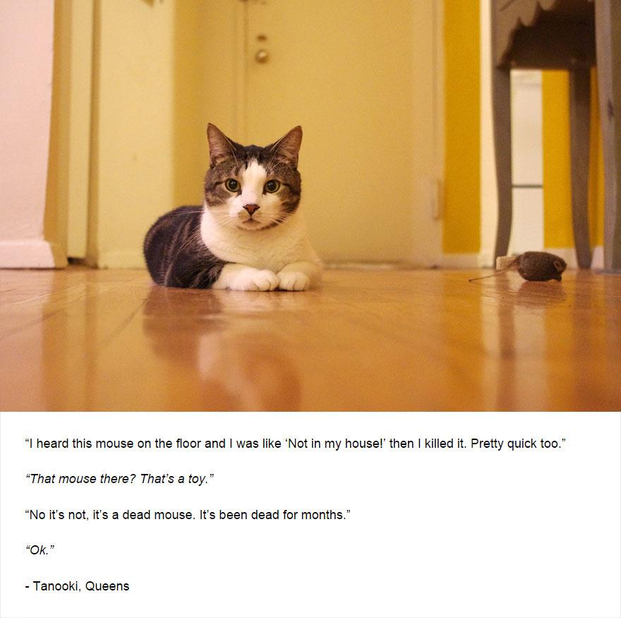 cat-secrets-07