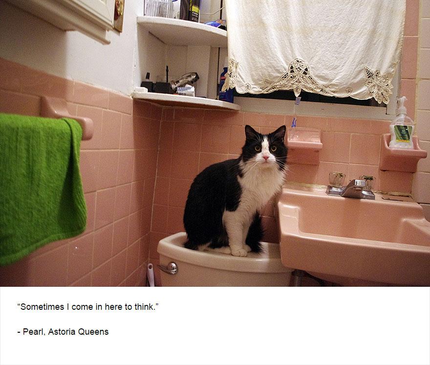 cat-secrets-08