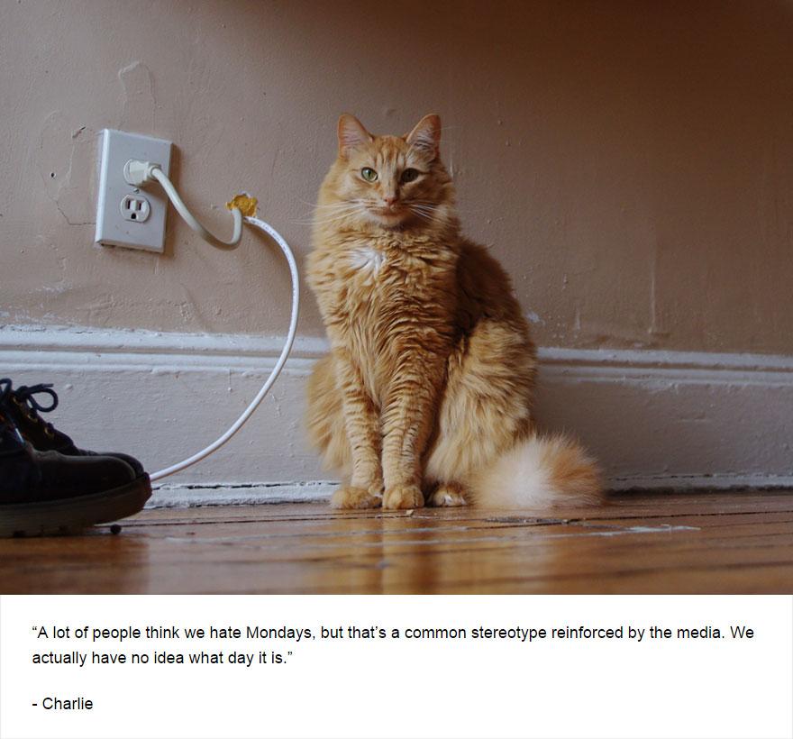 cat-secrets-09