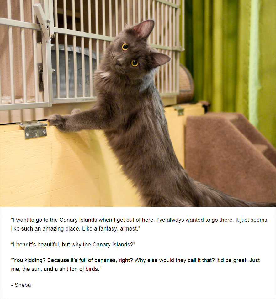 cat-secrets-10