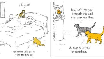 cat-talk-feature