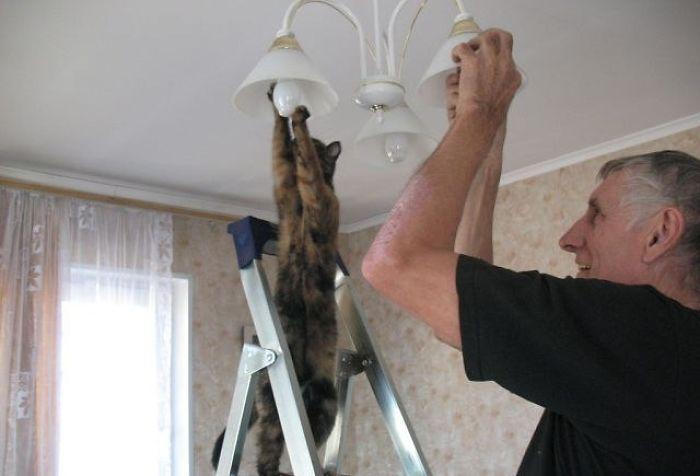 cats-acting-weird-9
