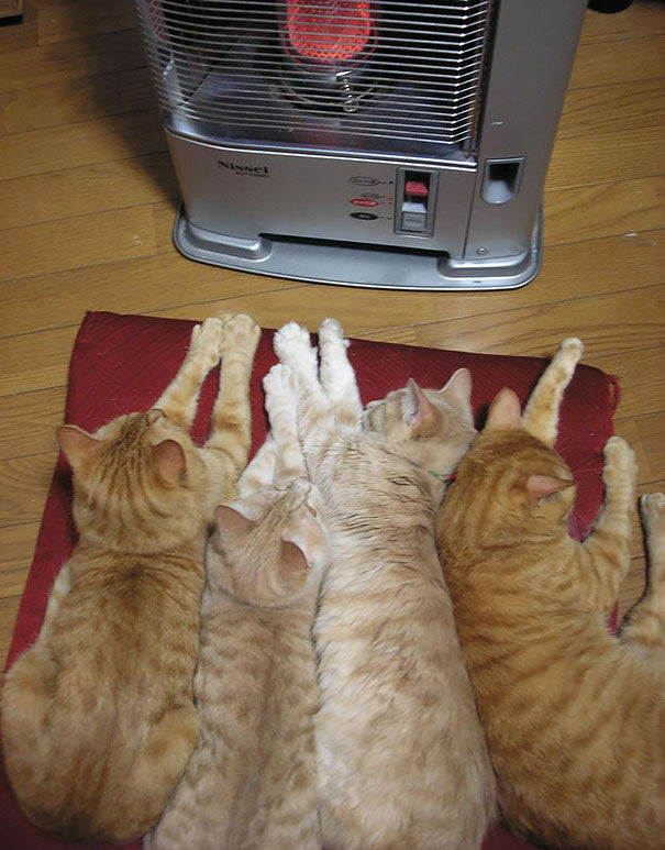 cats-and-heat-04