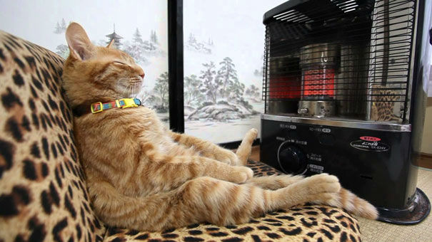 cats-and-warmth-14