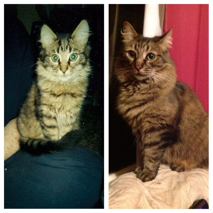 cats-growing-up-before-after-user-submissions-14
