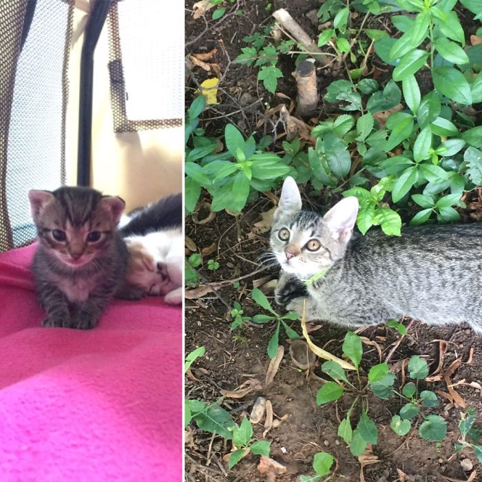 cats-growing-up-before-after-user-submissions-16