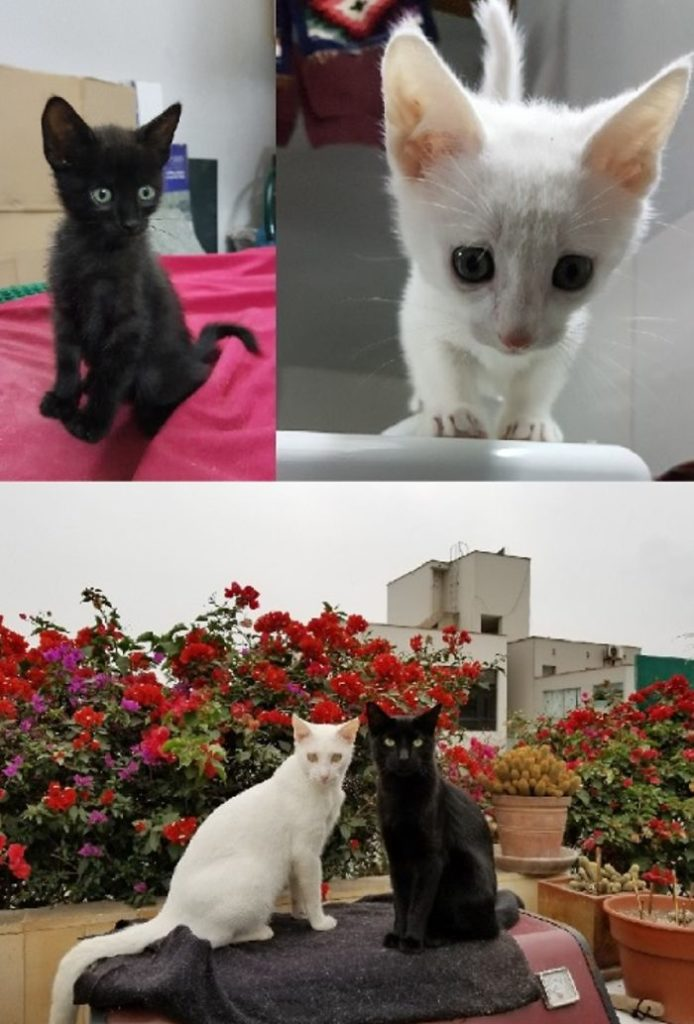 cats-growing-up-before-after-user-submissions-17