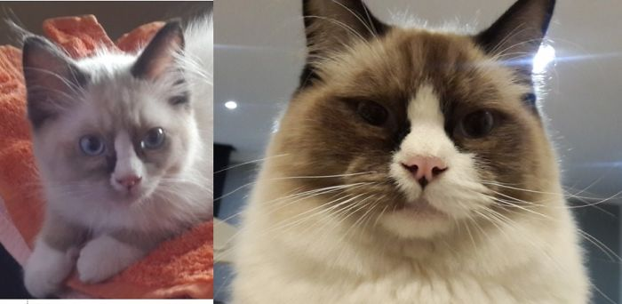 cats-growing-up-before-after-user-submissions-23