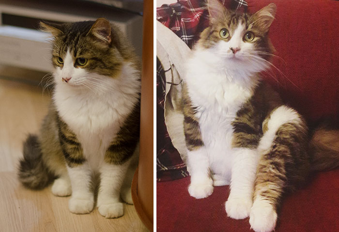 cats-growing-up-before-after-user-submissions-24