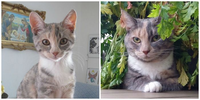 cats-growing-up-before-after-user-submissions-25