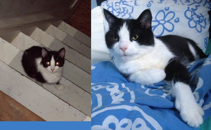 cats-growing-up-before-after-user-submissions-29