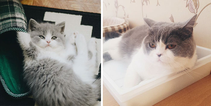 cats-growing-up-before-after-user-submissions-9