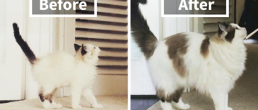 cats-growing-up-before-after-user-submissions-fb