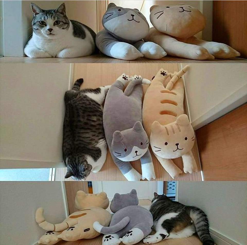 chubby-cats-02