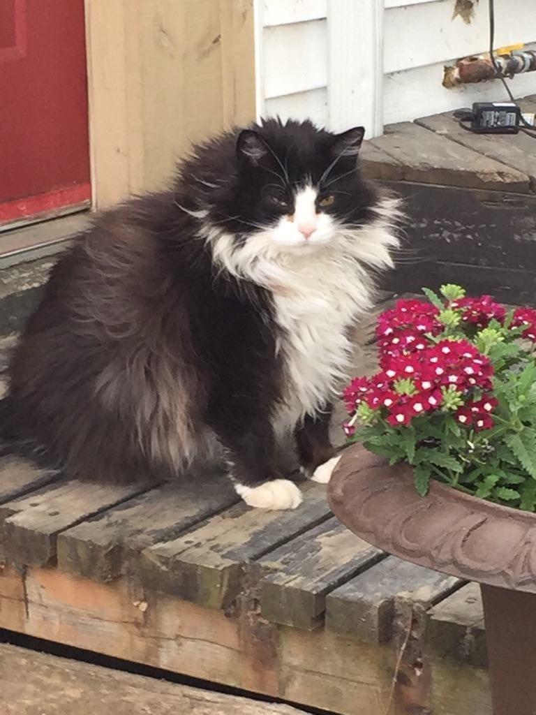 chubby-cats-04