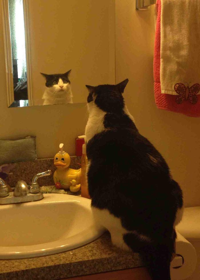 chubby-cats-07