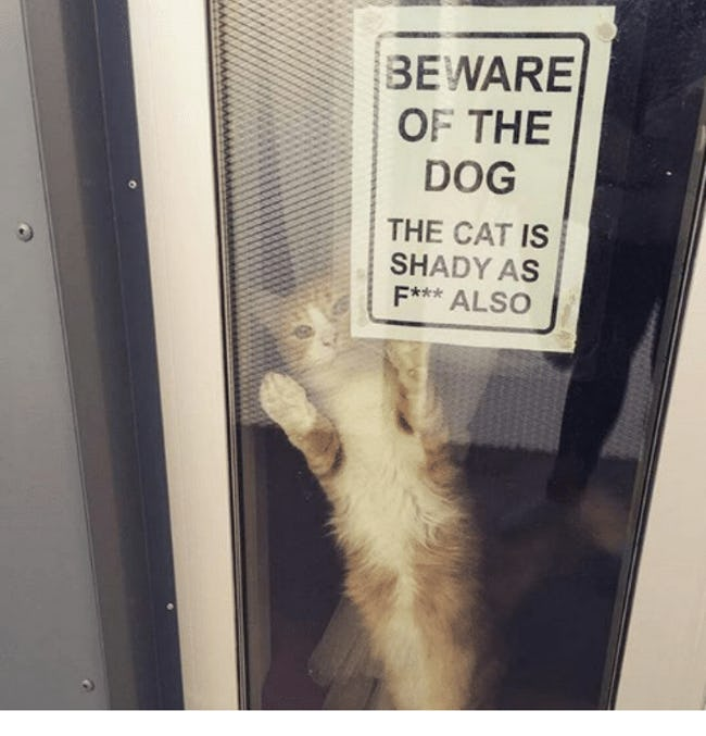 funny-cat-signs-01