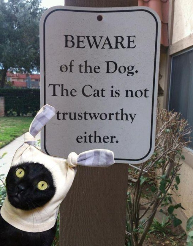 funny-cat-signs-05
