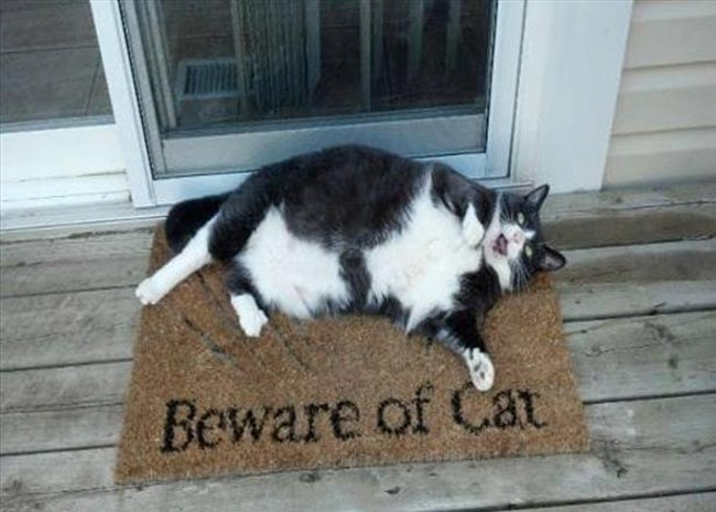funny-cat-signs-06