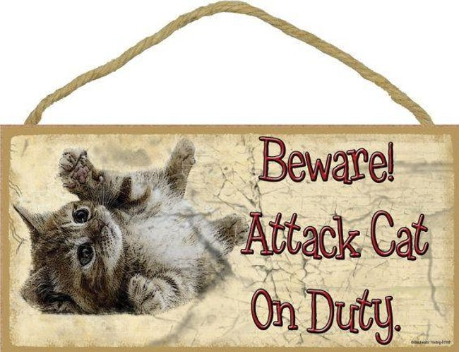 funny-cat-signs-13
