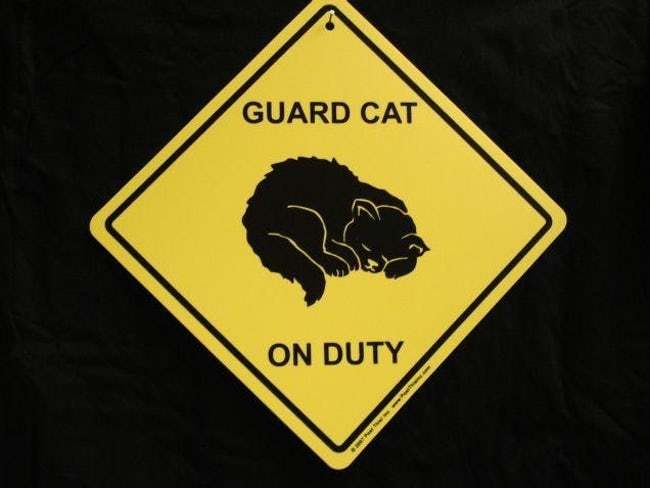 funny-cat-signs-14