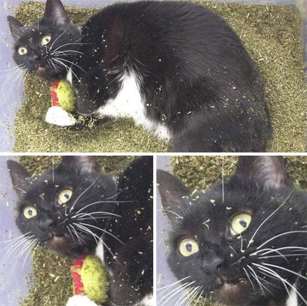 funny-cats-catnip-12
