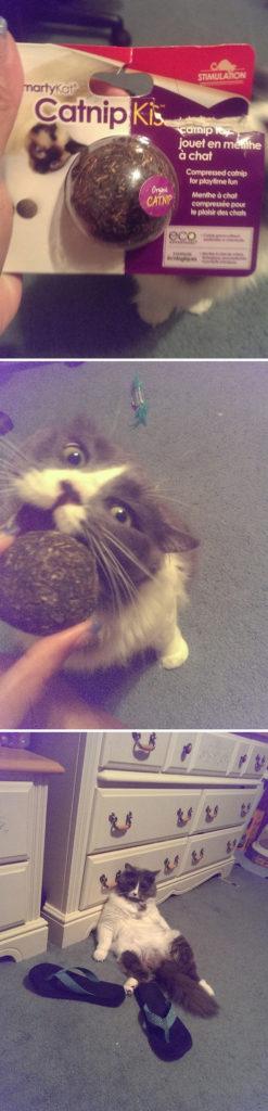 funny-cats-catnip-13