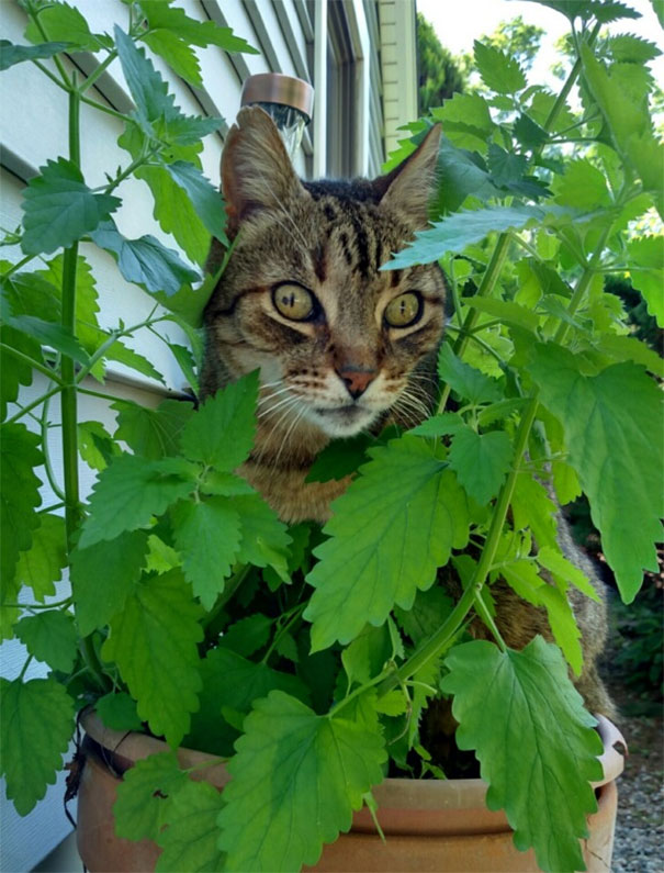 funny-cats-catnip-17