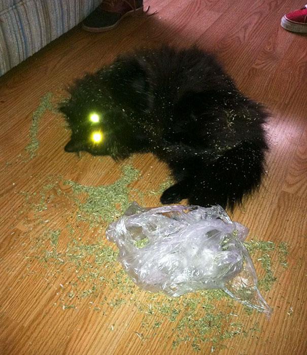 funny-cats-catnip-2