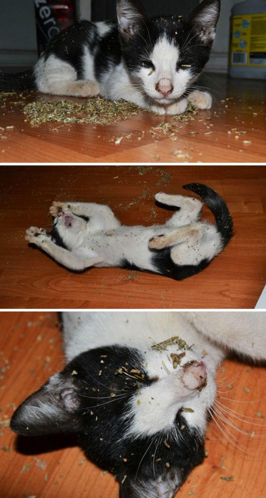 funny-cats-catnip-20