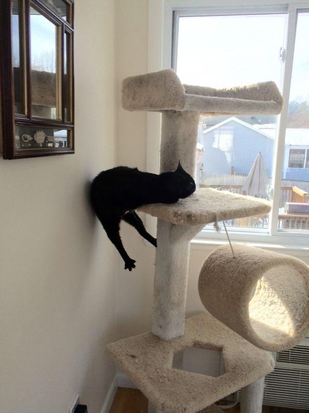 funny-cats-catnip-3
