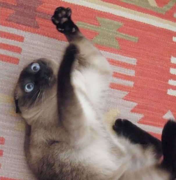 funny-cats-catnip-5
